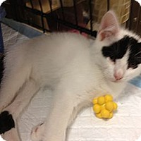 Adopt A Pet :: Zora - Fort Lauderdale, FL