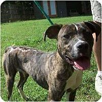 Adopt A Pet :: Linus - Okatie, SC