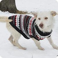 Adopt A Pet :: Klaus - Brooklyn, NY