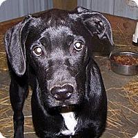 Adopt A Pet :: TESS - Chewelah, WA