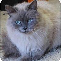 Adopt A Pet :: Morina - Davis, CA