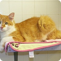 Adopt A Pet :: Frankie - Dover, OH