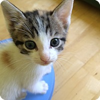 Adopt A Pet :: Merrelo - Monroe, GA