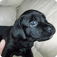 Adopt A Pet :: Zena - Woodstock, ON