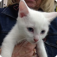 Adopt A Pet :: Frosty - Warren, OH