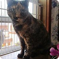 Adopt A Pet :: Marla - Witter, AR