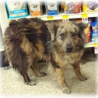 Adopt A Pet :: Toto - Las Vegas, NV