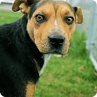 Adopt A Pet :: Sam *Petsmart GB* - Appleton, WI