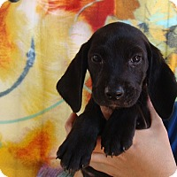 Adopt A Pet :: Poe - Oviedo, FL