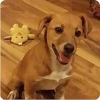 Adopt A Pet :: Cooper - Hanover, PA