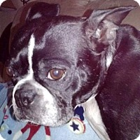 Adopt A Pet :: Boss **Courtesy Post** - Pleasant Plain, OH