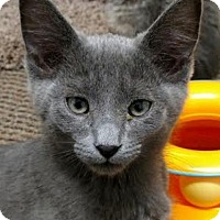 Adopt A Pet :: Gucci - Pleasant Hill, CA