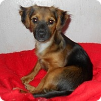 Adopt A Pet :: Doe - Albany, OR