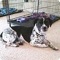 Adopt A Pet :: Sammi - Houston, TX