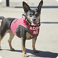 Adopt A Pet :: Gertie - Van Nuys, CA