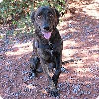 Adopt A Pet :: Violet - Sedona, AZ