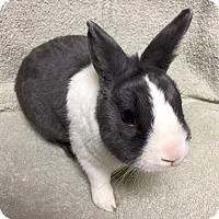 Adopt A Pet :: Brady - Wheaton, IL