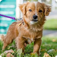 Adopt A Pet :: Toby D4111 - Fremont, CA