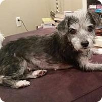 Terrier (Unknown Type, Medium) Mix Dog for adoption in Dallas, Texas - Katie