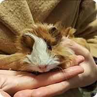 Adopt A Pet :: Mikey - Santa Rosa, CA