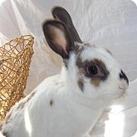 Adopt A Pet :: Rachel - Alexandria, VA