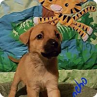 Adopt A Pet :: Sancho - Niagra Falls, NY