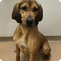 Adopt A Pet :: Lydia - Muscatine, IA
