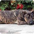 Adopt A Pet :: Sweeney