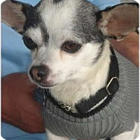 Adopt A Pet :: Nelson - Lake Forest, CA