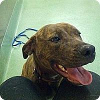 Adopt A Pet :: Molly URGENT - San Diego, CA