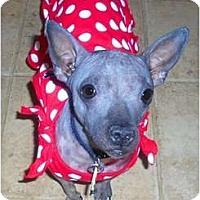 Adopt A Pet :: Lola - Glen Burnie, MD