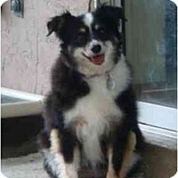 Adopt A Pet :: Tootsie - Orlando, FL