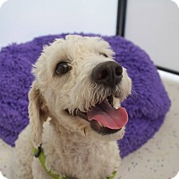 Adopt A Pet :: TREVOR - Mission Viejo, CA