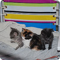Adopt A Pet :: Cinderella - Temecula, CA