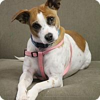 Adopt A Pet :: Elsa - Knoxville, TN