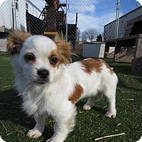 Adopt A Pet :: Tango - Meridian, ID