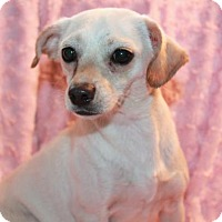 Adopt A Pet :: Heaven - Phelan, CA