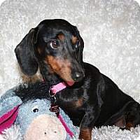 Adopt A Pet :: Mary Jane - Sioux Falls, SD