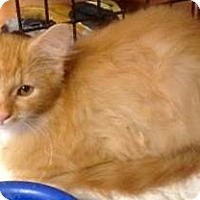Adopt A Pet :: Dutch - Chattanooga, TN