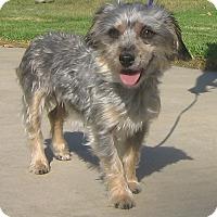 Adopt A Pet :: Dory-WATCH MY VIDEO!! - Irvine, CA