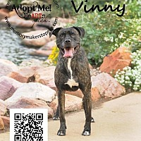 Pit Bull Terrier Mix Dog for adoption in Topeka, Kansas - Vinny