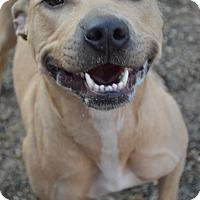 Adopt A Pet :: Scratchy - Toledo, OH