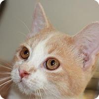 Adopt A Pet :: Pete - Colorado Springs, CO