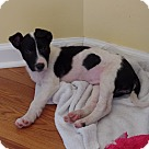 Adopt A Pet :: Domino