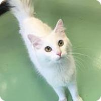 Adopt A Pet :: Joanna - Gadsden, AL