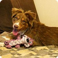 Adopt A Pet :: Solara - Malakoff, TX