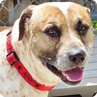 Adopt A Pet :: Clyde - Shaftsbury, VT