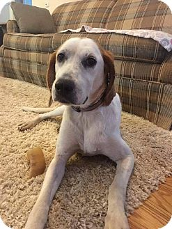 Hound (Unknown Type) Mix Dog for adoption in Youngsville, North Carolina - Maggie Mae