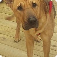 Adopt A Pet :: Tia - New Philadelphia, OH