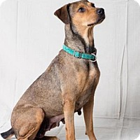 Adopt A Pet :: Lillian - Tulsa, OK